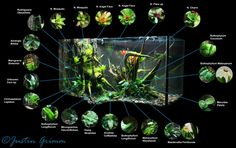 Peninsula Vivarium - In love with this vivarium.