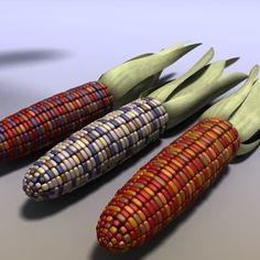 3ds max indian corn - Indian Corn Field Ear Maize... by Braden Lehman
