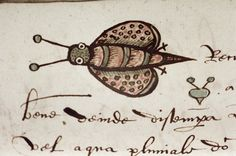 A very startled bee from an English alchemical manuscript made in 1596. Source: Oxford MS Ashmole 1423 f.26.