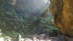 Jungle, Los Tilos, La Palma