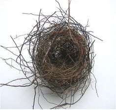 I find abandoned birds nests all over the farm...some with cow hair...some with wool or chicken feathers.  They are lovely.