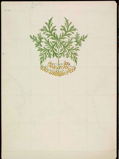 ... an incomplete design for a wallpaper or textile featuring a formalized plant with green scalloped foliage and small yellow flowers, 1907.
