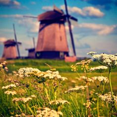 Summer in Holland by Allard One, via Flickr
