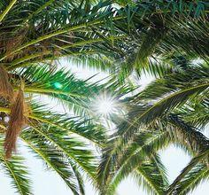 "Elly Alexiou on Instagram: ""🌴🌴 . . . . . #summervibes #summer2020 #cyclades #islandvibes #islandlife #beachlife #beachvibes #beachoftheday #travelgram #greekislands…"" The Shining, Greek Islands, Island Life, Tree Of Life, Summer Vibes, Plant Leaves, Trees, Beach, Plants"