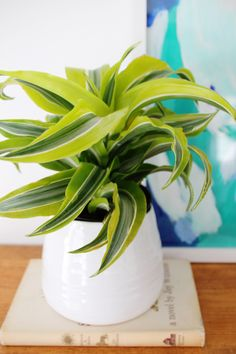 6 plants that are almost impossible to kill