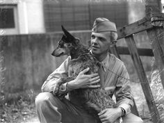 American soldier with cattle dog, Queensland. 1941-1945.