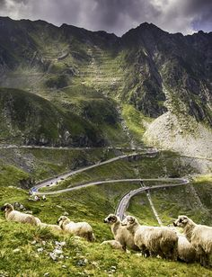 "Romania's second high altitude road, Transfagarasan was appointed by Top gear's host Jeremy Clarkson ""the best road in the world"". Bulgaria, Places Around The World, Around The Worlds, Visit Romania, Romania Travel, Europe On A Budget, Photos Voyages, Roadtrip, Top Of The World"