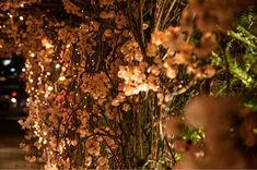 casamento-fasano-decoracao-renata-chapchap-vivi-farah-1 Dandelion, 1, Fruit, Holiday, Flowers, Plants, Wedding, Wedding Blog, Candy Room