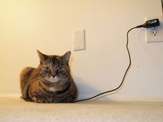 Charging the Kitty  (by Raccoon Photo)  Puuurrrfect for our technological age!