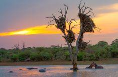 Sunset at Sunset Dam near Lower Sabie Camp in the Kruger National Park Kruger National Park, National Parks, Dam, White Egret, Elephant Walk, Animals Images, Africa Travel, Travel Photographer, Wildlife Photography