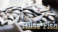 Baipail Biggest wholesale fish market   Hilsa Fish, Mini Rui Fish, Vetki...