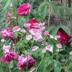 Ihr dürft drei Rosen mit auf eine einsame Insel nehmen.... - Seite 3 - Rund um die Rose - Mein schöner Garten online