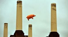 pigs dew fly