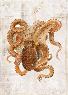 Antike Octopus Art Collage Print  Naturgeschichte von 1001treasures