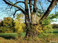 Alter Baum in historischer Kulturlandschaft am Gut Barkhausen bei Oerlinghausen in Ostwestfalen