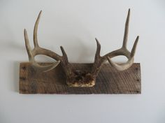 Rustic Vintage White Tail Deer Antler by ManCaveVintageMarket Deer Skulls, Cow Skull, Deer Antlers, Antler Mount, Antler Art, Deer Mounts, Oh Deer, Decoration, White Tail