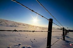 Farm field and fence in winter. Carstairs Alberta Canada