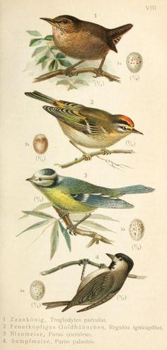 Vögel und Vogelstimmen : - Biodiversity Heritage Library