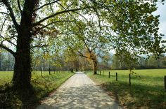 Cades Cove is one of our favorite short drives in the Smokies