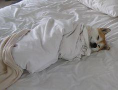 Bed burrito.