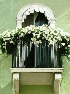 White Petunias on the balcony, pretty.