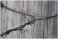"""All tied up""  Weathered Fence Post and Barb Wire"