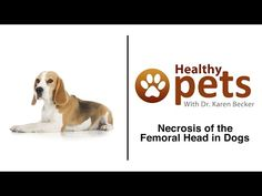 Three Ways to Help Your Pet Lose Weight - Pet Obesity: What Are the Risks Involved?