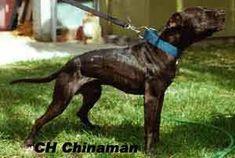 garners ch. chinaman