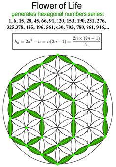 hexagonal_numbers Sacred Geometry Symbols, Sacred Geometry Tattoo, Lotus Flower Art, Flower Mandala, Pilou Pilou, Flower Of Life Symbol, Tattoo Coloring Book, Magic Squares, Geometric Drawing