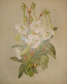 white flowers  no. - 03