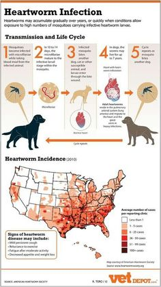 Facts about heartworm disease-and why it is so important to keep pets on regular preventative. Ask us about your pet's heartworm medication today! Dog Health Tips, Pet Health, Vet Assistant, Vet Med, Lunge, Vet Clinics, Veterinary Technician, Veterinary Receptionist, Veterinary Services