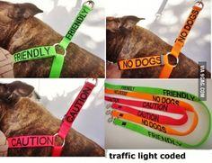 Such a good idea for dog lovers