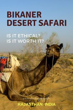 A Bikaner Desert Safari is one way of exploring and getting to know the Bikaner environment and Rajasthani culture. Is it worth the try? Is it ethical? Visit Australia, Australia Travel, Africa Travel, India Travel, Scuba Diving Australia, Safari, Australian Beach, Travel Activities, Bhutan