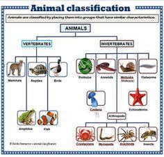 english worksheet vertebrate and invertebrate animals homeschool vertebrates invertebrates. Black Bedroom Furniture Sets. Home Design Ideas