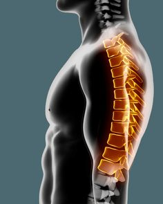 LaRocca Chiropractic has been the top rated chiropractic clinic in the Spring Hill and Brooksville area for over a decade. Visit us today to stop the pain.