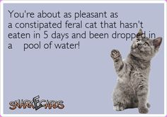 You're about as pleasant as a constipated feral cat that hasn't eaten in 5 days and been dropped in a pool of water! | Snarkecards