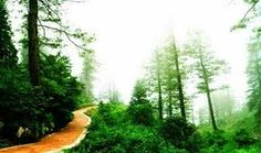 """Daringibadi is a hill station in Odisha state of eastern India. It is widely known as """"Kashmir of Odisha""""."""