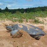 Helicopter tour naar de Matapica Zeeschildpadden