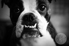 Pensacola Pet Photography #pet #photography #photographer #portrait #pensacola