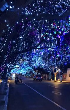 - This magnificent net of Christmas lights – hot On