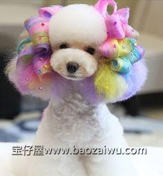 Poodle curls