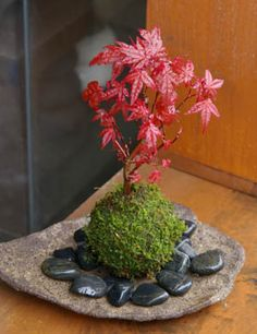 moss ball and Japanese maple