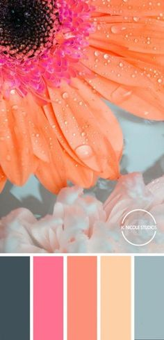 Fresh Floral Color Palette I LOVE the combination of the pink, orange and turquoise. Color Schemes Colour Palettes, Spring Color Palette, Bedroom Color Schemes, Colour Pallete, Bright Colour Palette, Bright Bedroom Colors, Orange Color Schemes, Turquoise Color Palettes, Paint Color Combinations