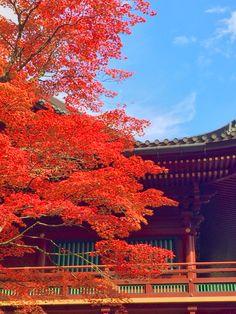 A maple tree in Nikko temple.