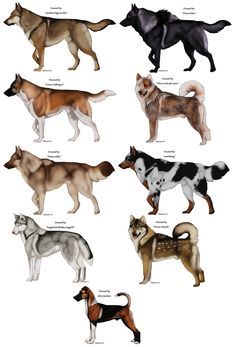 Perros Animal Sketches, Animal Drawings, Anime Animals, Cute Animals, Character Art, Character Design, Fantasy Wolf, Prehistoric Animals, Wild Dogs