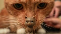 A cat called Kitty undergoes life-saving surgery after swallowing a toy cat - also named Kitty.