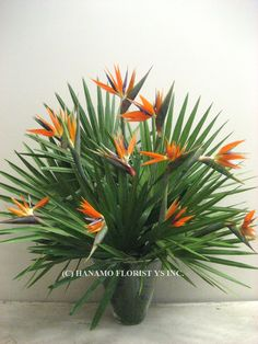 Tropical flowers like bird of paradise can always provide you the great quality of beauty with its bright colors.