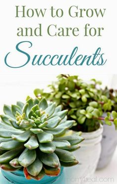 How to grow and care for succulents. These could add a unique touch to your decor! | Jon-E-VAC | (888) 942-3935 | www.jonevac.com