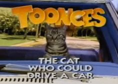 the driving cat.the cat who could drive a car.He drives around, all over the town. Toonces the driving CAT! Crazy Cat Lady, Crazy Cats, Best Of Snl, Snl Characters, Snl Skits, Bad Person, Seriously Funny, Comedy Tv, Cat Cards