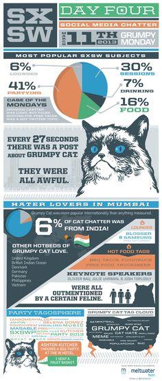 . #catinfographics